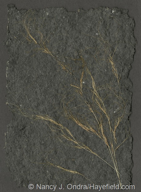 Black handmade paper with Stipa tenuissima Seedheads