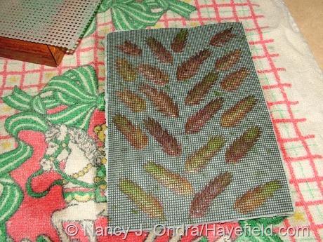 Handmade paper with Chasmanthium latifolium seedheads (with window screening)