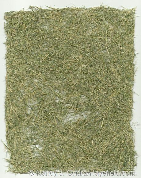 """Paper"" made from Hakonechloa macra 'Aureola' foliage (no pulp)"