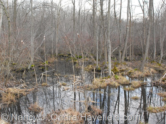 Wetland along Fennel Road, Milford Township, PA