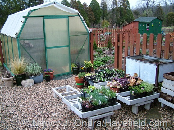 Nursery area at Hayefield