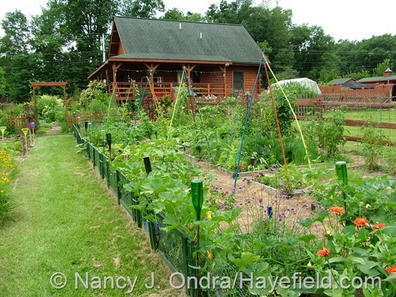 Vegetable garden at Hayefield.com