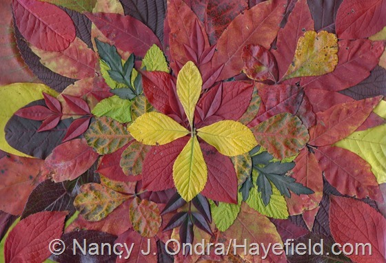 Fall leaves from Hayefield 2013