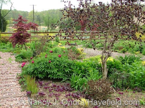 Front Garden: May 6, 2013 at Hayefield.com