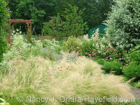 Side Garden: July 1, 2013 at Hayefield.com