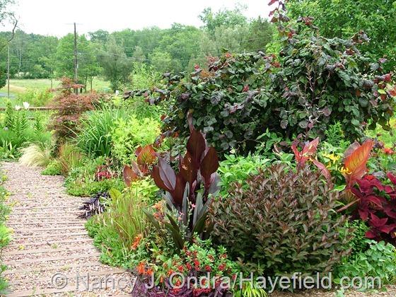 Front Garden: July 12, 2013 at Hayefield.com