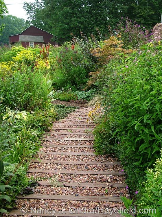 Side Garden: August 22, 2013 at Hayefield.com