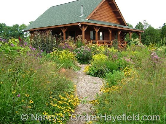 Front Garden: September 5, 2013 at Hayefield.com