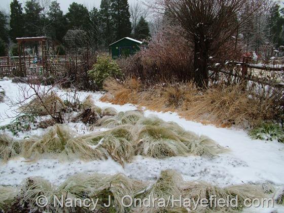 Side Garden: December 9, 2013 at Hayefield.com
