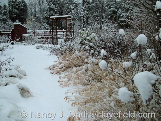 Side Garden: December 10, 2013 at Hayefield.com