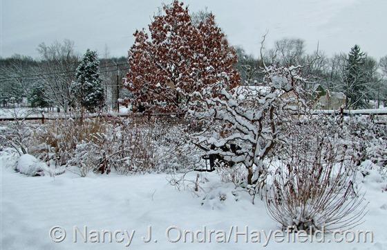 Front Garden: December 10, 2013 at Hayefield.com