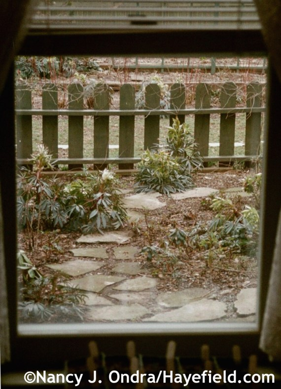 Garden framed by window - Hayefield.com