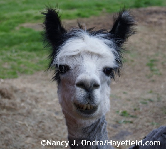 Happy Duncan at Hayefield.com