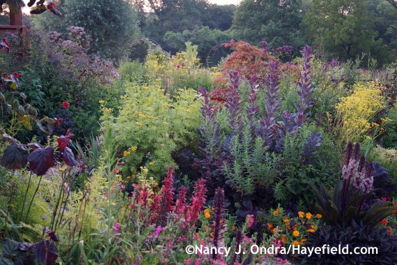 Front Garden at Dawn ~ August 9, 2014 at Hayefield.com