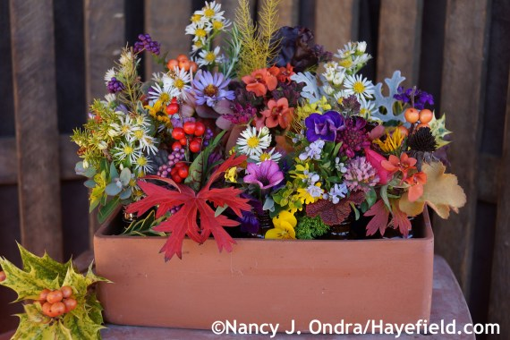 November arrangement at Hayefield.com