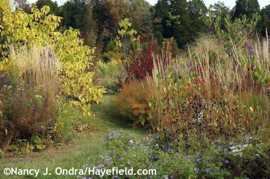 October 2014 in The Shrubbery at Hayefield.com