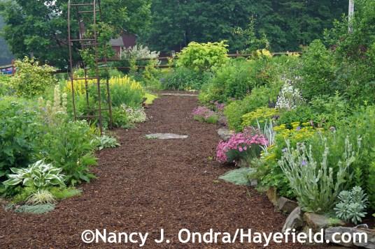 Side Garden June 2014 at Hayefield.com