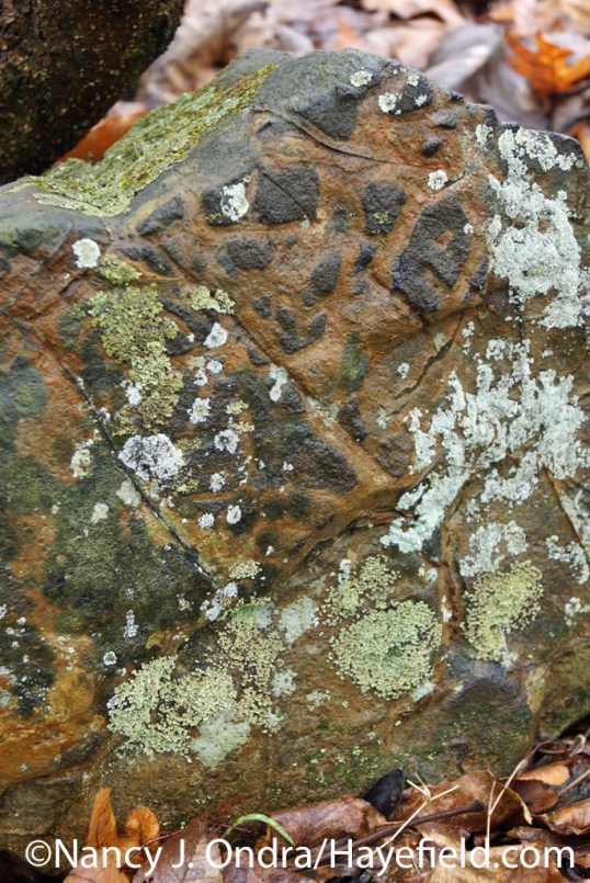 Etched hornfels with lichen - Milford Township, PA