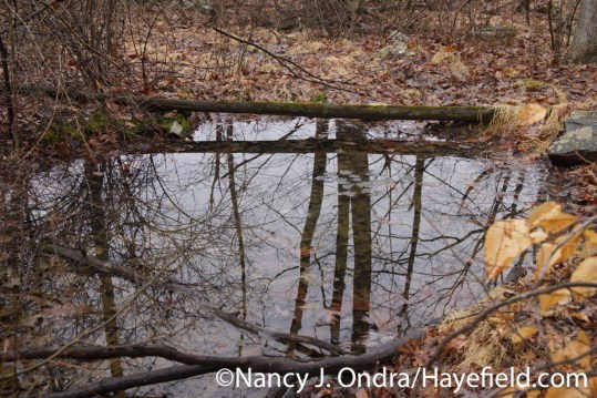 Vernal Pool - Milford Township, PA