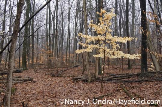 Woodland - Milford Township, PA