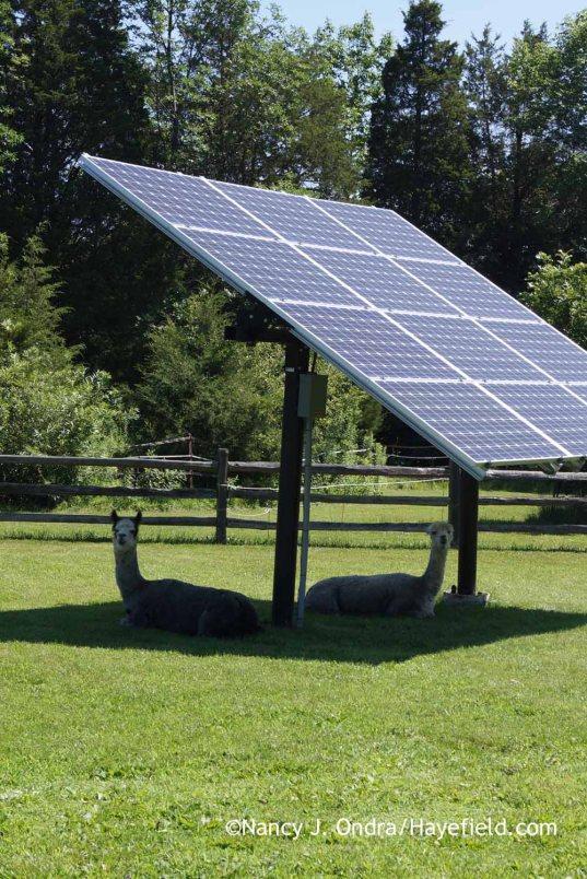 Daniel and Duncan under the solar panels; Nancy J. Ondra at Hayefield