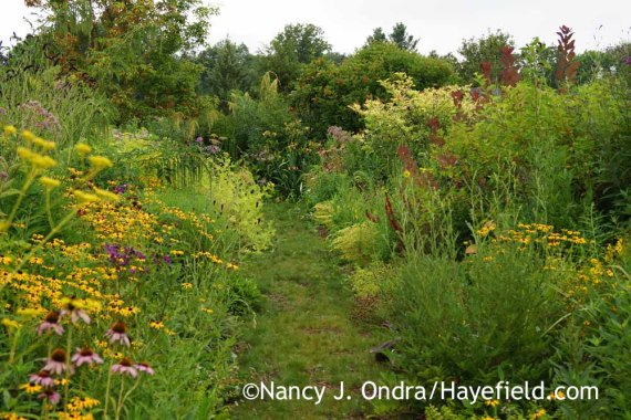 Front Garden at Hayefield (mid-August 2015); Nancy J. Ondra