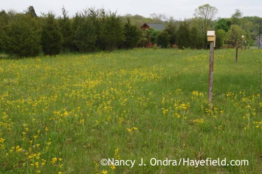 Upper meadow at Hayefield [Nancy J. Ondra]