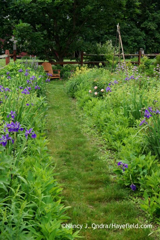 By fall, this path will be lined with asters and other bright late bloomers; for now, it's a quieter scene with 'Gerald Darby' iris (Iris x robusta) in flower [Nancy J. Ondra at Hayefield]