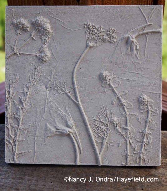 Summer herbs and edibles botanical casting [Nancy J. Ondra at Hayefield]