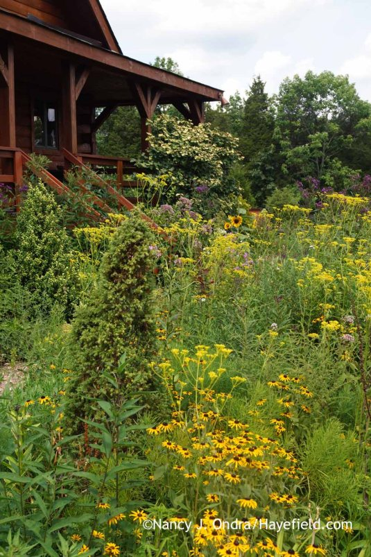 Getting a bit closer and taking two steps to the left makes it possible to hide most of the browned bits, and suddenly the border looks lush and flower-filled. Lesson: Never assume that you know a garden if you've only ever seen it in pictures. [Nancy J. Ondra at Hayefield]