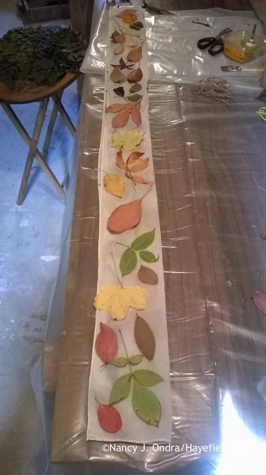 Setup for eco printing on silk with leaves [Nancy J. Ondra at Hayefield]