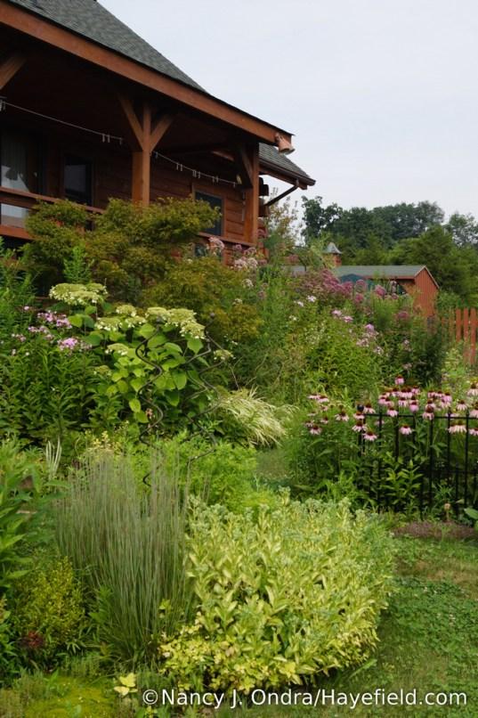 The Back Garden at Hayefield - August 2017 [Nancy J. Ondra/Hayefield.com]