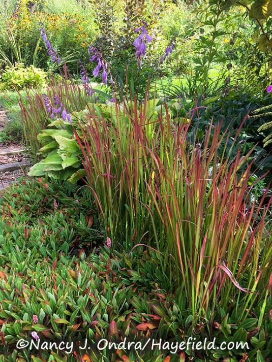 Hayefield Front Garden