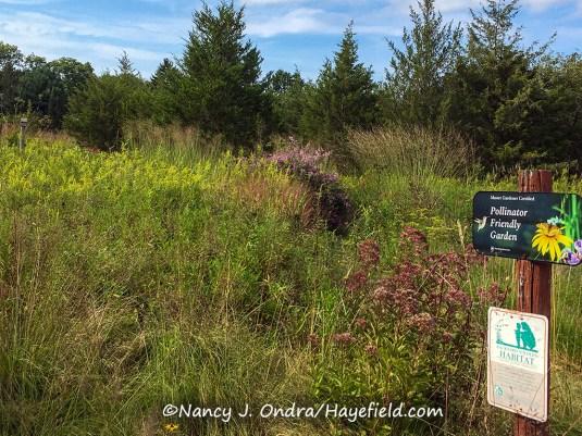Hayefield Upper Meadow