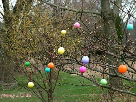 ova-on-larger-tree