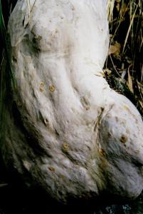 Bottom Tree WM