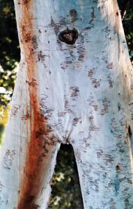 Woman Tree Torso WM