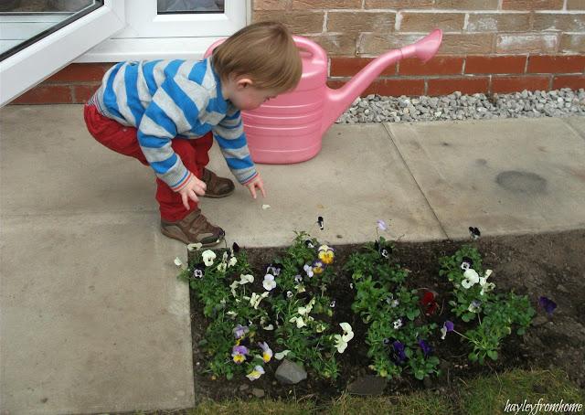 Picking Petals