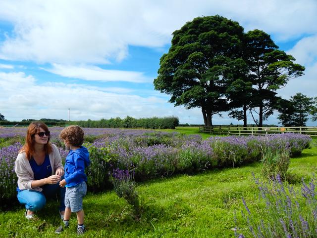 Lavender Inglenook Farm (6 of 8)