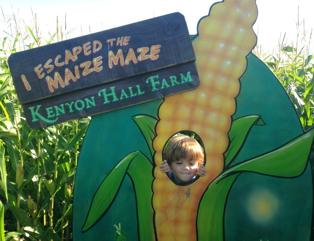 maize-maze-8
