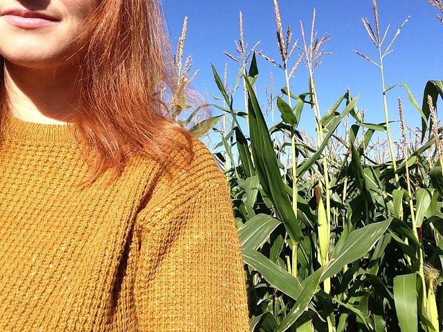 maize-maze-9
