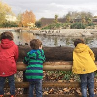 Chester Zoo and March of the Penguins 2