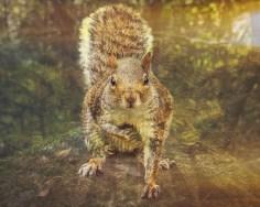 Squirrel by Hayley Roberts