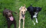 Henry, Winnie and Twirl