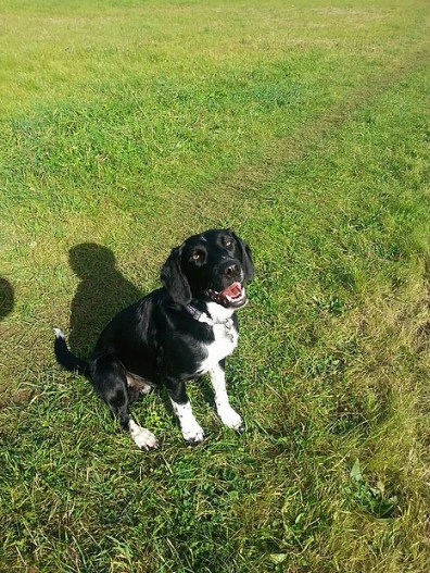 Twirl score 10/10 We're very happy with the service from Hayley. Twirl loves going on walks with her and his doggie friends whilst we are at work. We never worry as we know that Twirl is having a lovely time. We would defiantly recommend Hayley.