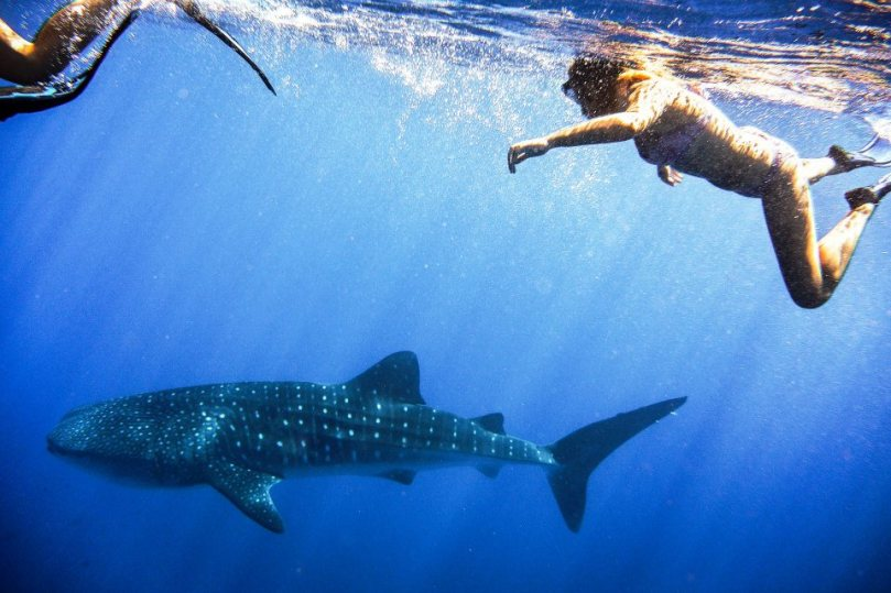 Swimming with Whale Sharks Exmouth New Zealand Road Trip Travel Writing Class