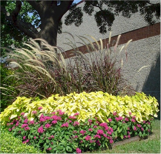Plant identification haynes landscape and maintenance for Purple grasses for landscaping