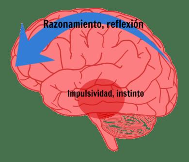 cerebro-reflexivo
