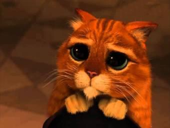 gato de shrek triste por la sacarina