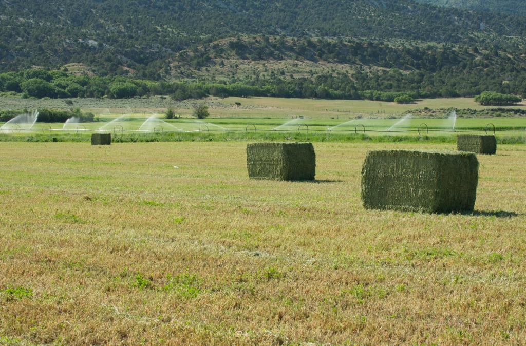 Lander Alfalfa